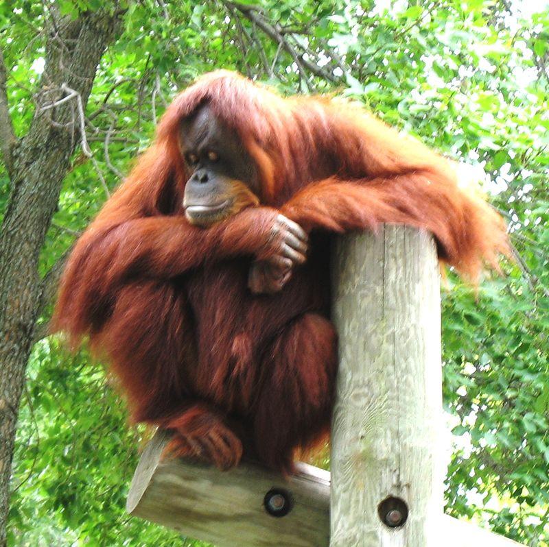 Edited ape